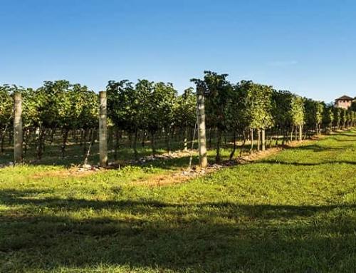 Nature bathing – Relax tra vino ecielo
